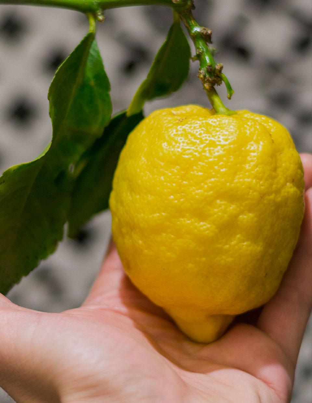 La cucina di Antonino Cannavacciuolo: il limone